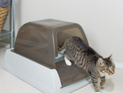 6 Best Self Cleaning Litter Box Reviews 2018 [Why You NEED Our #1 Choice]