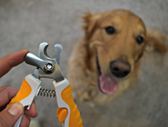6 Best Dog Nail Clippers Reviews 2018 [Ultimate Buying Guide]
