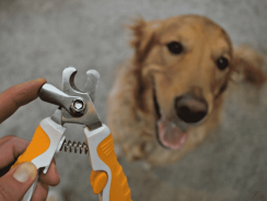 7 Best Dog Nail Clippers With Sensor Reviews 2020 [Ultimate Buying Guide]