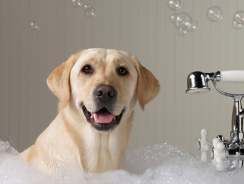 Best Dog Shampoo Reviews 2019 [Plus Ultimate Buying Guide]