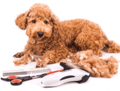 10 Professional Dog Clippers Reviews 2020 [Ultimate Buying Guide]