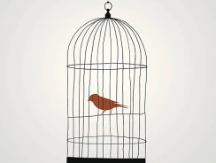 Best Cages For Your Bird | Reviews 2019 [Ultimate Buying Guide]