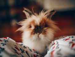 5 Best Bedding for Hamsters, Rats, and Bunnies Reviews