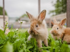 5 Best Rabbit Hutch Reviews   Cozy and Spacious Bunny Cages