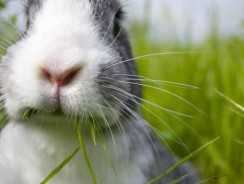 What to Feed your Pet Rabbit | Best Foods for a Healthy Bunny