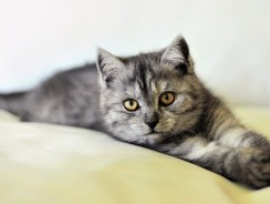 5 Popular Exotic Cat Breeds That Are Legal To Own!