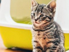 Solving Common Problems with Cat Litter Boxes: GUIDE