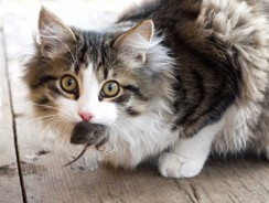 Why Do Cats Bring Dead Animals Home?