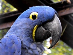 5 Hyacinth Macaw Best Large Cages of 2018 Reviews