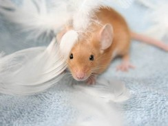 Dreaming About Mice In The House? What Do Mice Represent Spiritually?