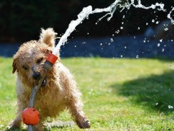 How Long After Spaying Can My Dog Play? Practical Spaying Aftercare Tips