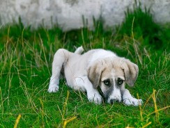 How To Tell If Your Dog Has A Uti – 9 Medical Signs All Dog Owners Should Spot