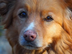 When To Euthanize A Dog With Cushing's Disease – 3 Helpful Reasons To Prevent Dog Suffering