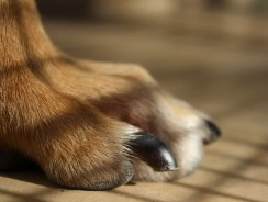 Does It Hurt A Dog When You Cut The Quick – Easy Dog Nail Care Guide