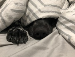 Why Does My Dog Like To Sleep Under The Bed? 3 Practical Reasons
