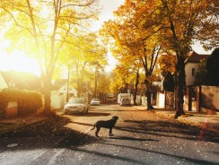 Dog Hit By Car Survival Rate – 3 Essential Factors