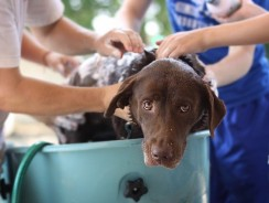 Dog Shivering After Bath – 6 Ways To Prevent A Dog Shivering
