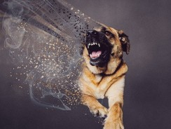 How To Stop A Dog From Being Aggressive Towards Cats – 3 Instant Solutions
