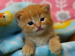 How to Take Care of a Kitten: Caring For Your Young Kitty