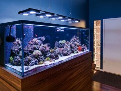 How Long To Leave Aquarium Lights On Planted Tank