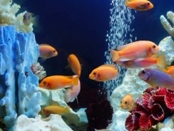 5 Best Aquarium Air Pump of 2019 Reviews   More oxygen for your fishes and plants