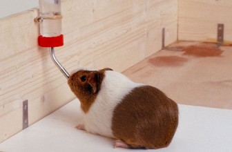 4 Best Guinea Pig Water Bottle Reviews | Leak Proof Fliptop for Small Pets