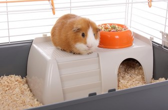 Guinea Pig Cages Ideas and Types