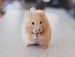 How Much Does It Cost To Take A Hamster To The Vet?