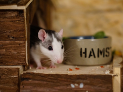 How To Take Care Of A Hamster | Essential Tips for Different Most Popular Breeds