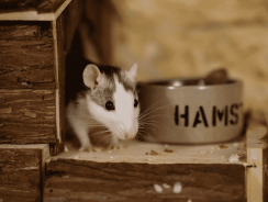 How To Take Care Of A Hamster For Beginners | Hamster Care Sheet