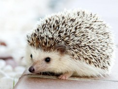 Buying a Hedgehog Cage – Common Mistakes and How To Avoid Them