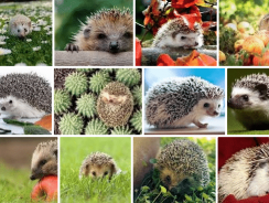What Do Hedgehogs Eat – The Ultimate Guide