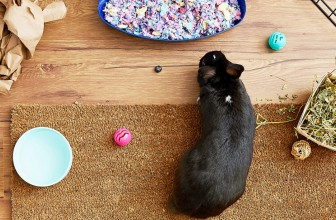 Litter Training Your Pet Rabbit | Keep Your Bunny Cage Clean