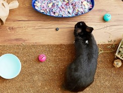 Litter Training Your Pet Rabbit   Keep Your Bunny Cage Clean