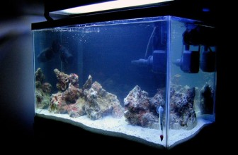 How To Cycle A Saltwater Tank In 24 Hours