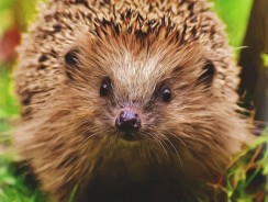 How To Get A Hedgehog To Like You – 5 Practical Tips
