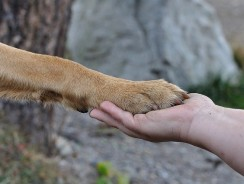 Why Does My Dog Put His Paw On My Face? 3 Concrete Reasons For Dog Behavior
