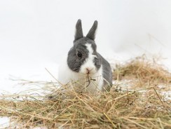 Hay for Rabbits: The Basis of a Healthy Bunny Diet