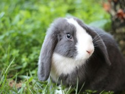 How to Take Care Of a Bunny | Looking After a Rabbit Facts and Tips