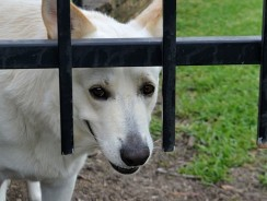Dog Behavior After Being Attacked – 4 Ways To Get Back To Normal