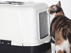 8 Best Cat Litter Box Reviews| 2019 Guide to Litter Box Odor Control