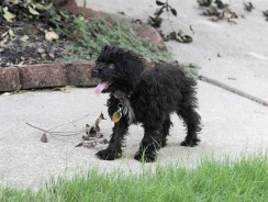 My Dog Ate Poop How Do I Clean His Mouth? 3 Fast Action Solutions