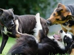 Understanding Temperament of Dogs | Insights into Puppies Personality