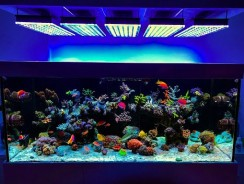 Best Aquarium Light To Prevent Algae
