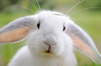 Why Does My Rabbit Bite Me? | Don't Blame 'Fluffy' – Make Him a Happy Bunny!