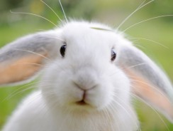 Why Does My Rabbit Bite Me? | 6 Smart Tips To Avoid Rabbit Bites
